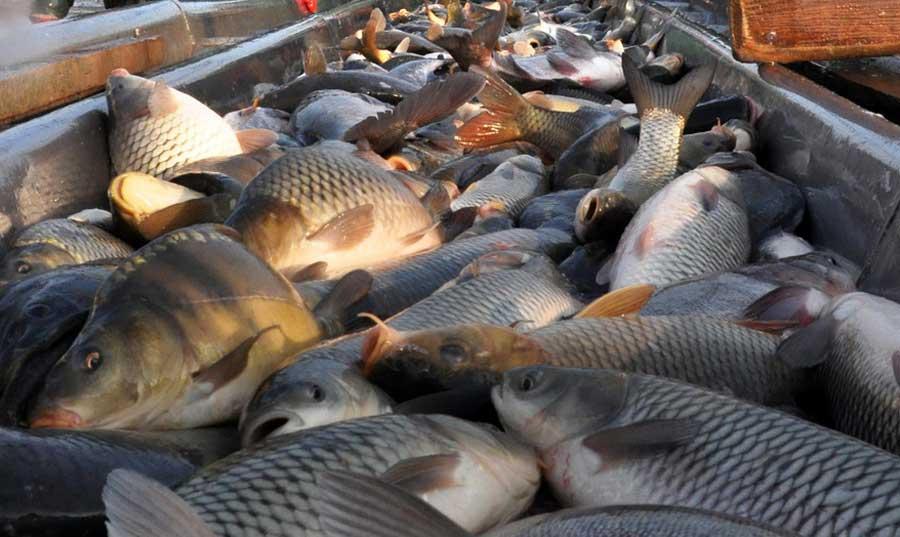 vrućine ribnjacima