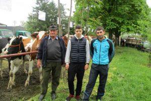 tomasevac-izlozba-krave-romanov