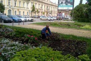 "JKP ""Čistoća i zelenilo"""