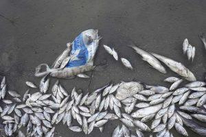 uginula riba jezero