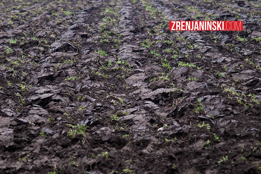 njiva-poljoprivreda
