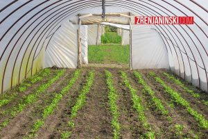 plastenik-poljoprivreda