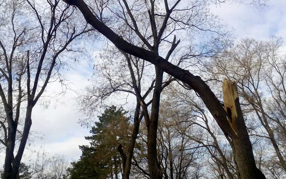 Polomljene grane predstavljaju opasnost po prolaznike