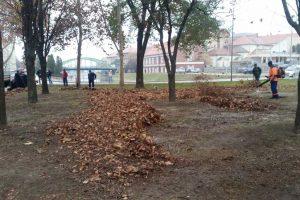 lišće čistoća i zelenilo