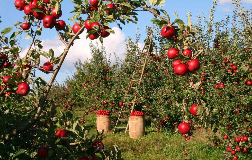 Obuka namenjena proizvođačima i otkupljivačima voća i povrća
