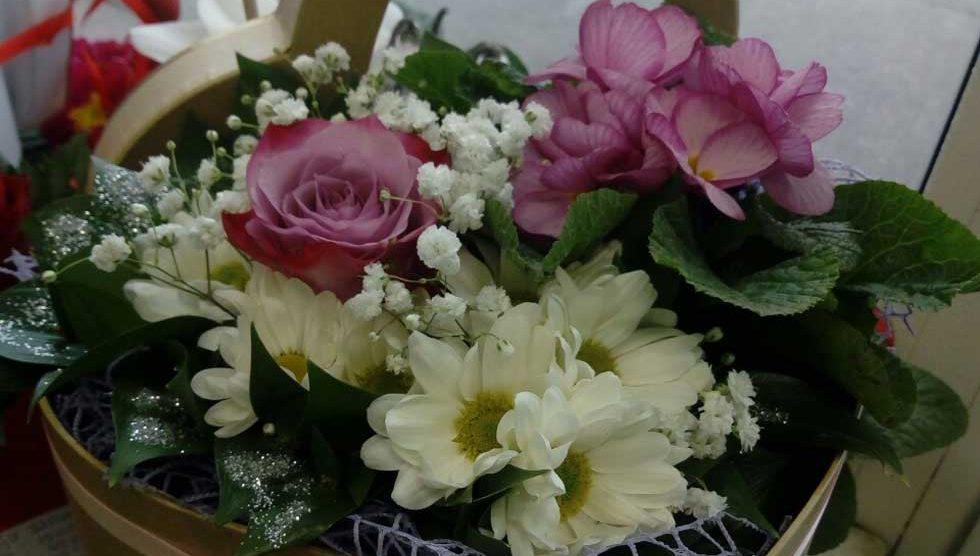 cvećare jasmin i narcis
