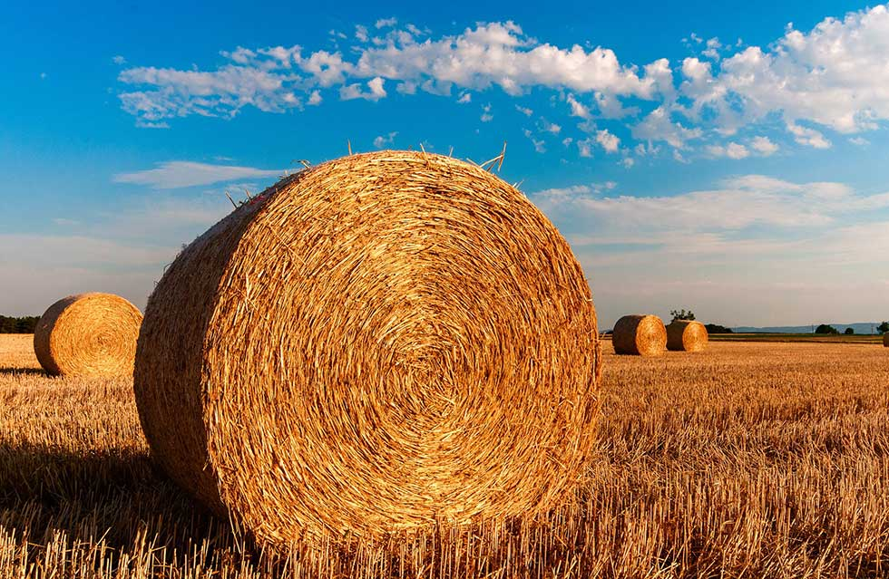 zadrugarstvo u poljoprivredi