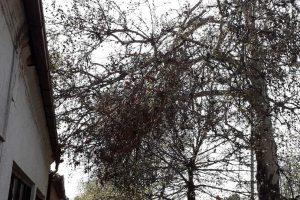 polomljene grane