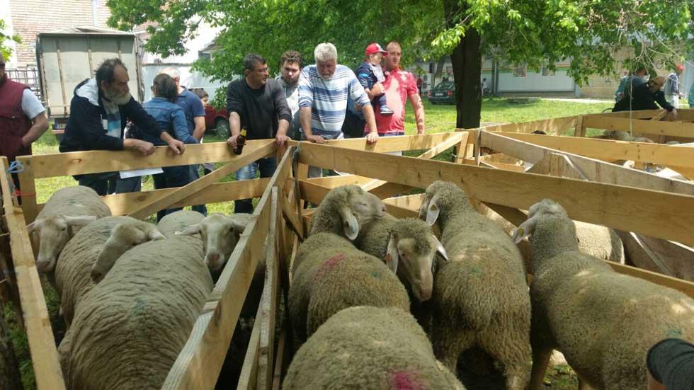 ovčari