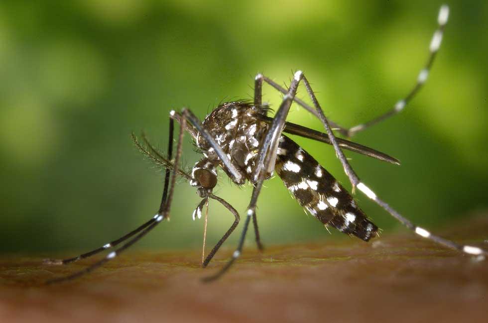 tretmani protiv komaraca