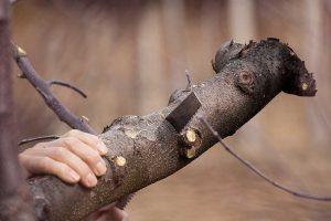 šumska krađa