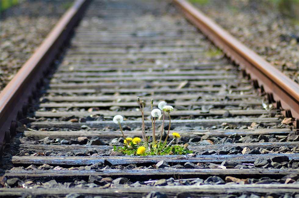 hemijski voz uklanja rastinje pored pruga