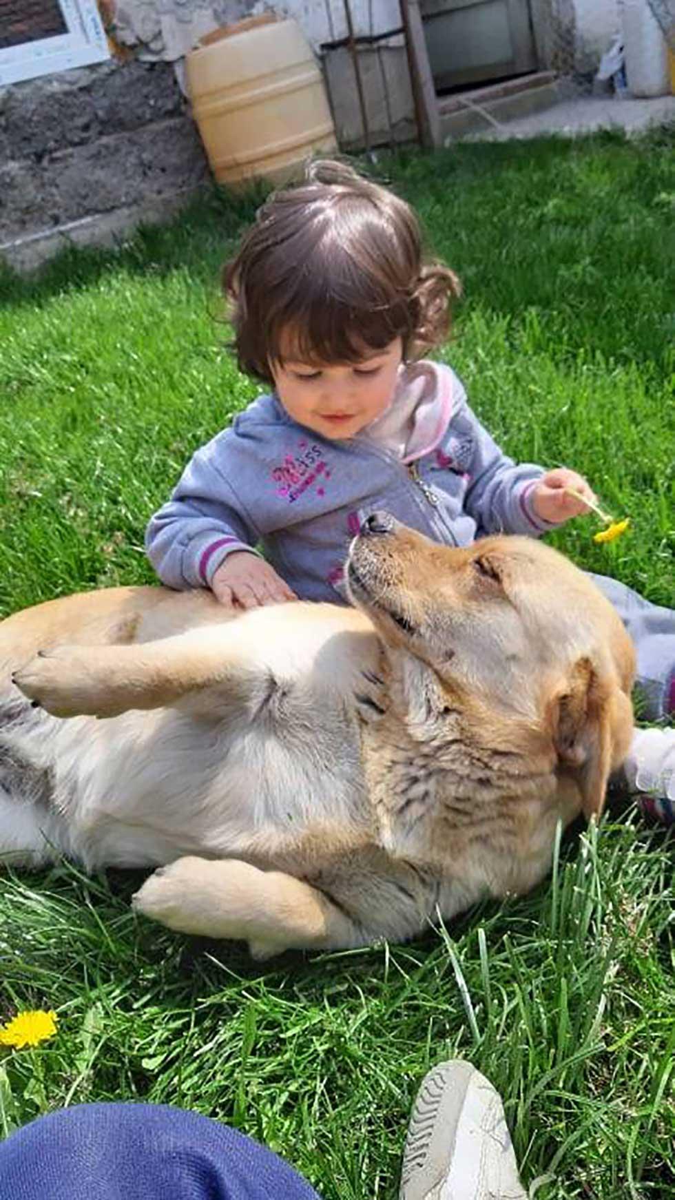udomljavanje životinja