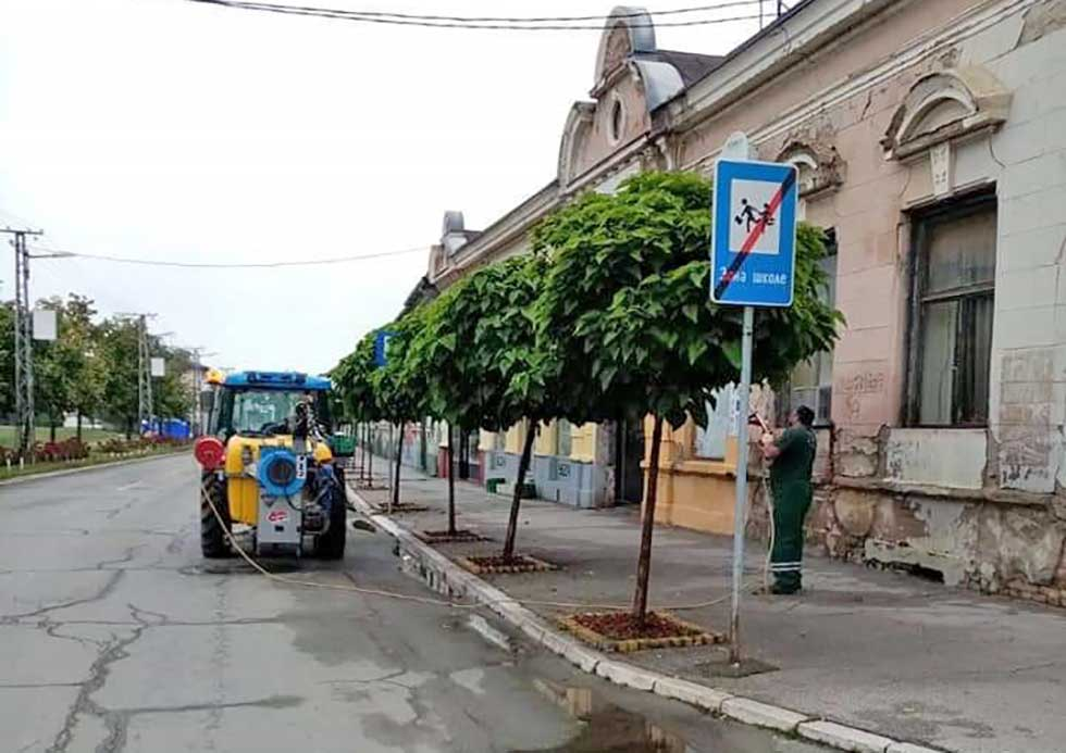 stabla katalpi
