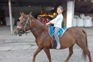 braća milan i goran sučević uzgajaju brdske konje