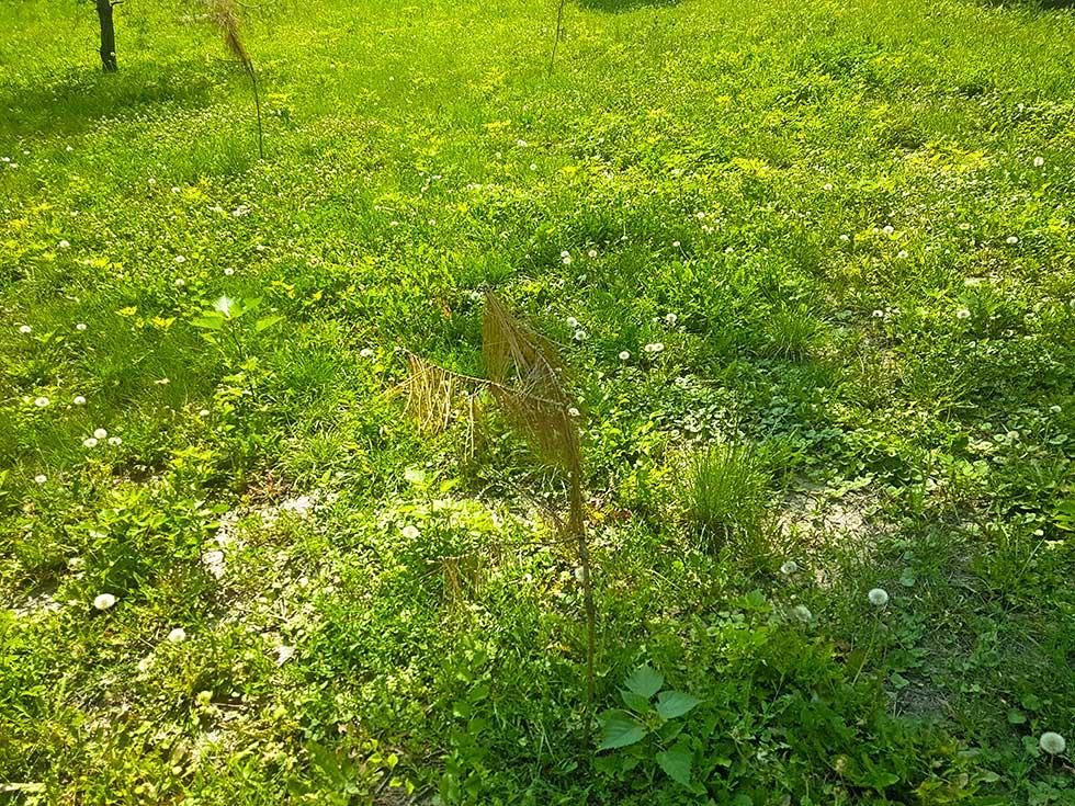 sadnice u plankovoj bašti