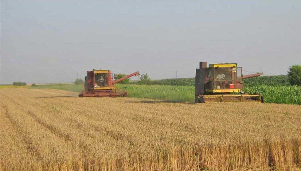 pšenica i ječam