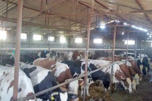 proizvođači mleka