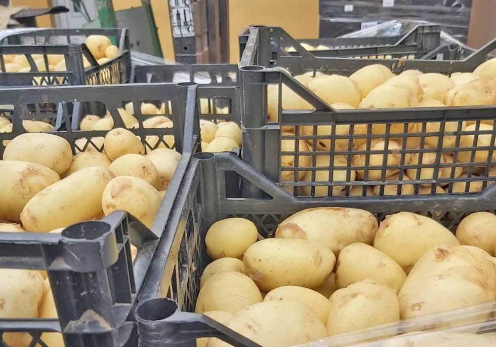 porodica sarvak proizvodi krompir