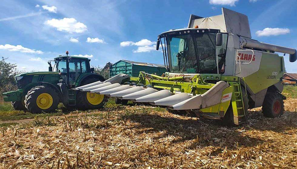 žetva kukuruza