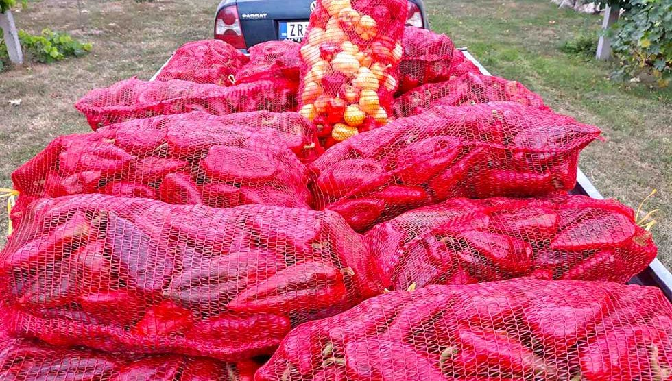 zlatoje čokić se bavi proizvodnjom povrća