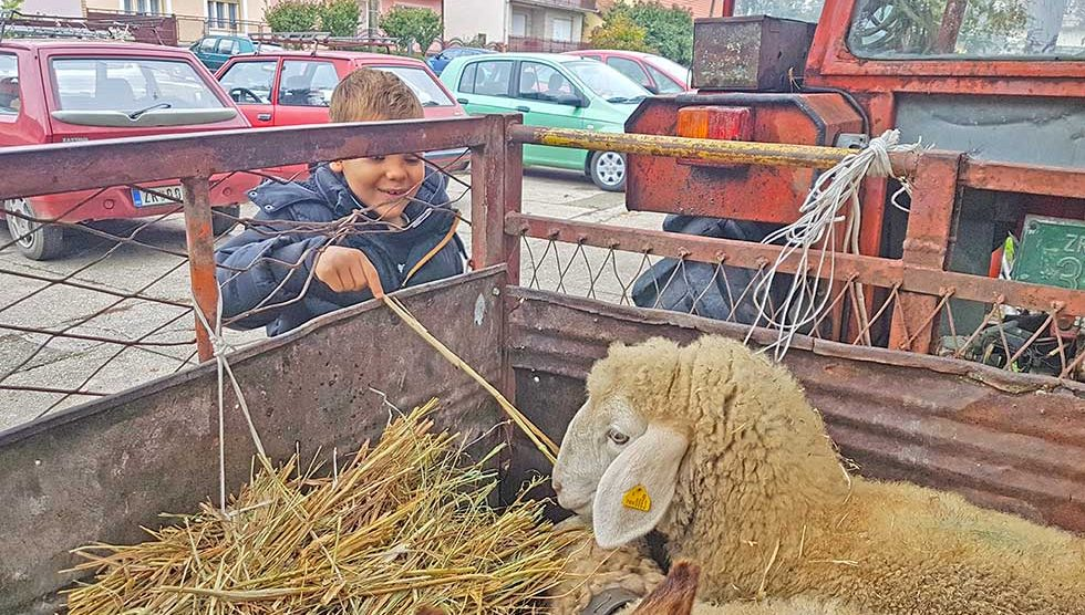 pastirski dan 2020