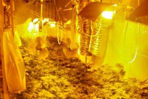 laboratorija za uzgoj marihuane