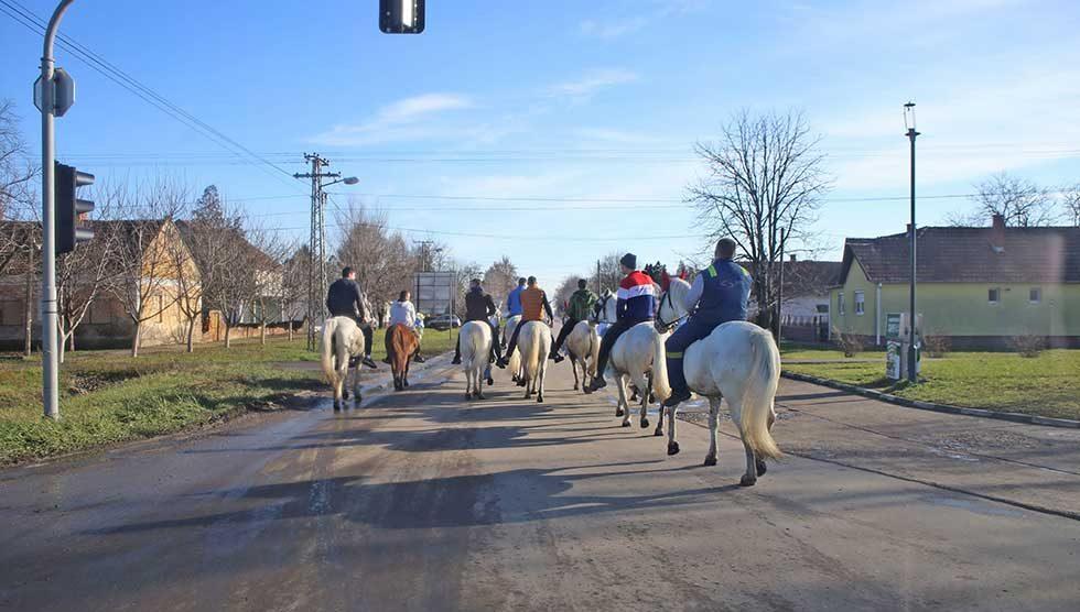 mladi izveli konje