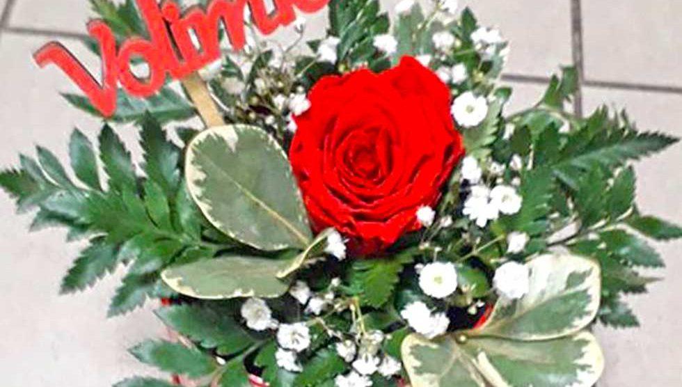 cvećara jasmin