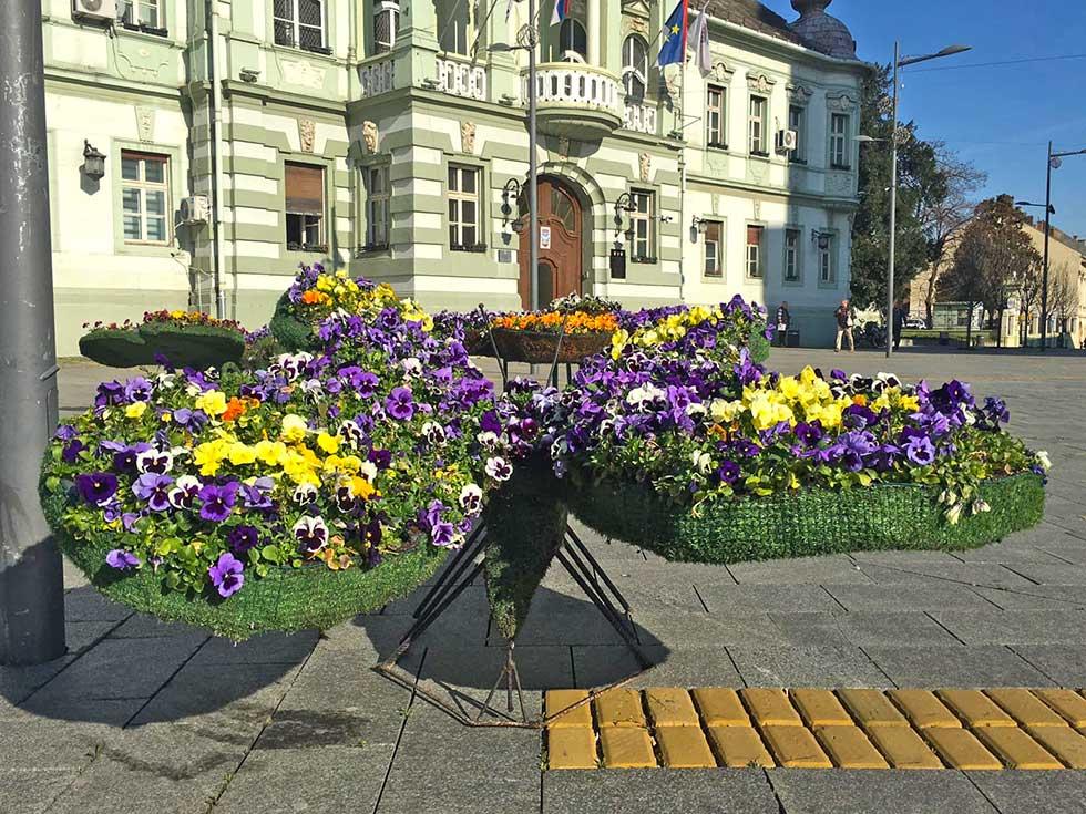 pet cvetnih aranžmana