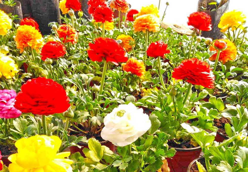 marina katanić rac se bavi proizvodnjom cveća