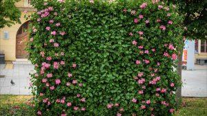 cvetni zidovi