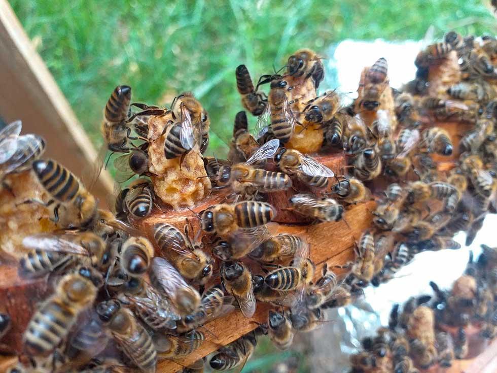milovan i branislav mijatov se bave pčelarstvom
